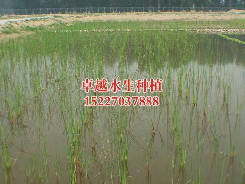 成功案例_湿地1