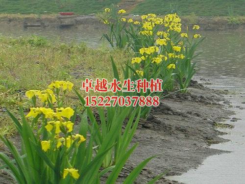 天津北运河
