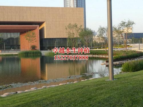 天津文化广场 (2)